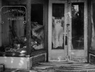 store front-8079-5