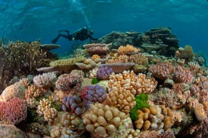 great-barrier-reef-diver-615