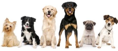 types-of-dog-breeds