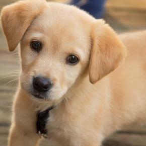 Having Pets Instead of Kids: AReaction